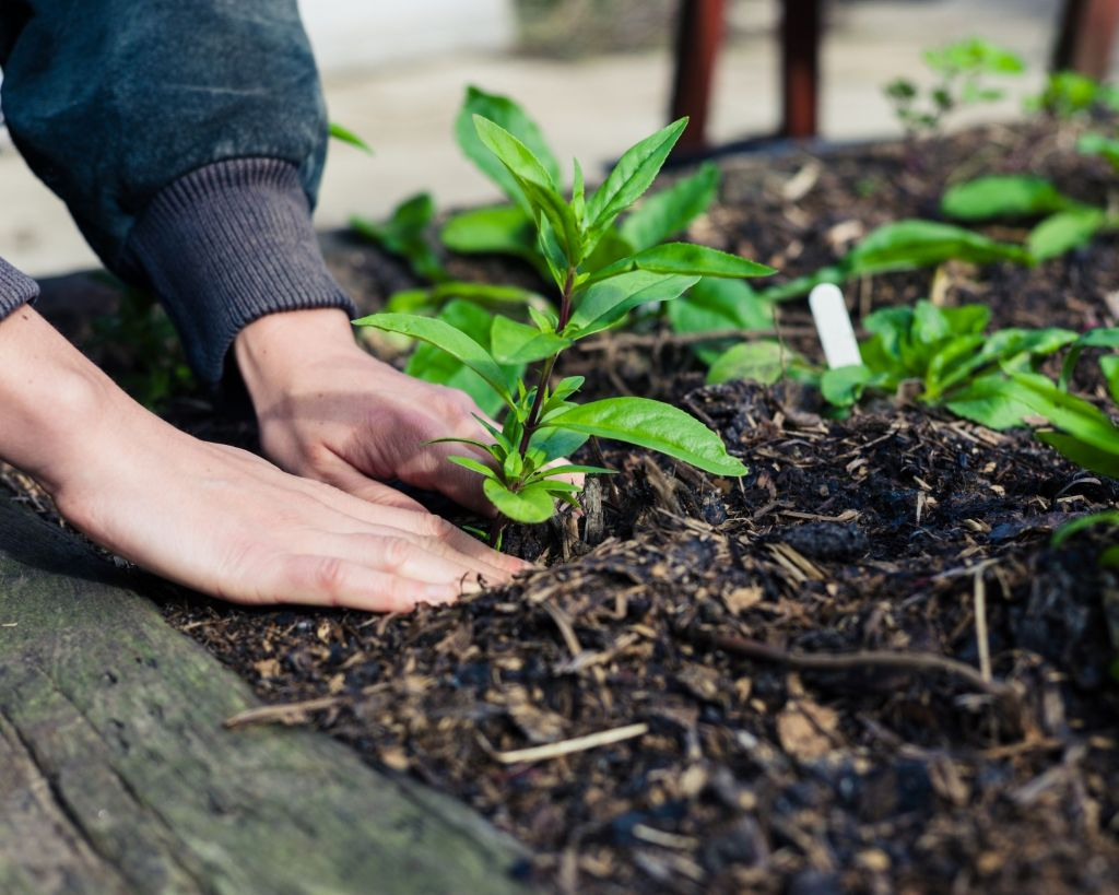 Garden Therapy, Base Beautification